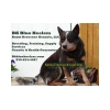 Burnt Kerosene Blue Heelers